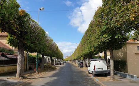 L'entretien du patrimoine arboré de Vaires-sur-Marne