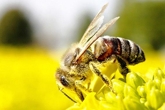 Gestion différenciée, abandon des produits phytosanitaires et valorisation de la biodiversité